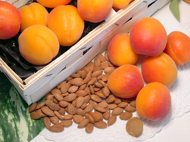 Aprikosen frisch und getrocknet, süsse Aprikosenkerne