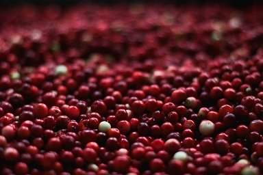 Cranberries-getrocknet-aus-der-ganzen-Beere