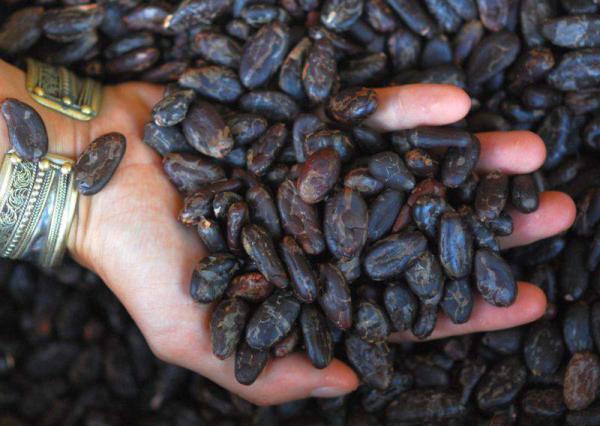 Kakao Bohnen, geschält, Wildwuchs, Rohkost-Spitzenqualität, der herbe Vitalstoff-Boost