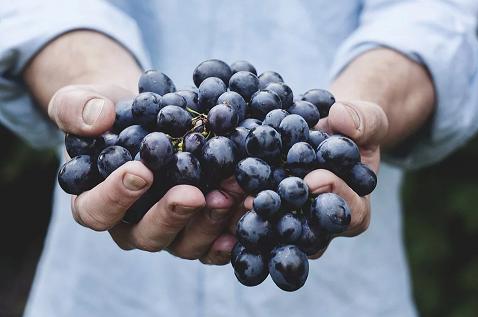 Traubenkernmehl-aus-Weintrauben-zur-RegenerationPMZRDv7WEmlyK