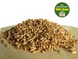 Emmer, Bio Urgetreide, ganzes Korn, 100% kaufen