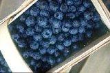 Lactosefreie Produkte Heidelbeeren getrocknet, gesüsst mit kaufen