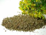 Johanniskraut (Hypericum perforatum) kaufen