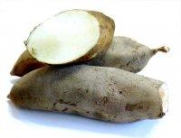Frische Yacon Wurzel aus Deutschland - inulinreich und schmackhaft