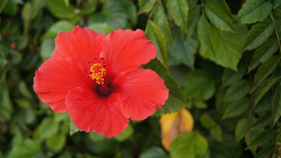flower-2356773_960_720