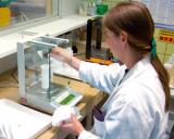 Tests & Geräte Haarmineral-Analyse (Salus Haaranalyse kaufen